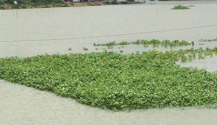 sirajgonj+flood+ag