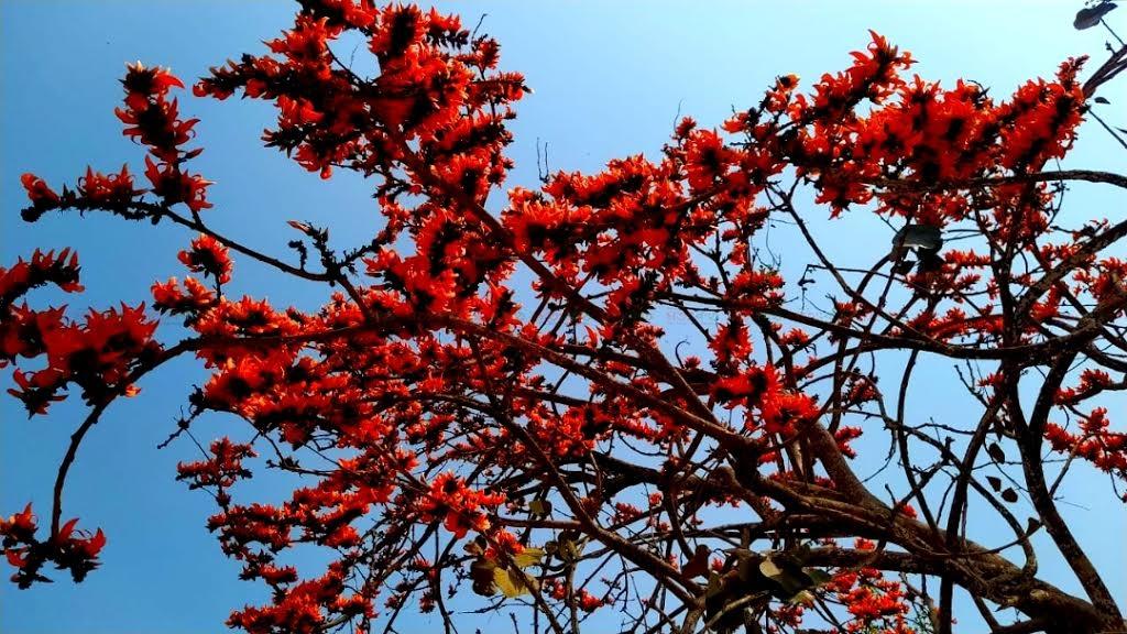 গাইবান্ধা+জেলা+shatakantha+pabna