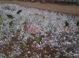 Rain news 09.04.21