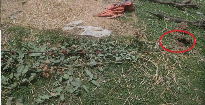 Trees+tarash+sirajgong